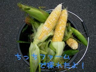 s-DSCN3662.jpg