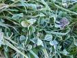 たつみち脇の霜-2
