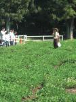 落花生収穫 1