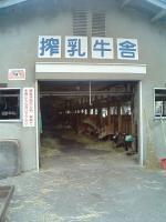 山川牧場搾乳牛舎