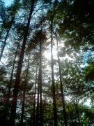十勝千年の森森林