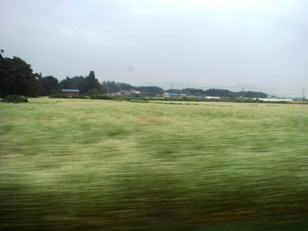 9.車窓から見る蕎麦畑