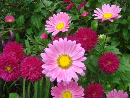 7.店前のお花