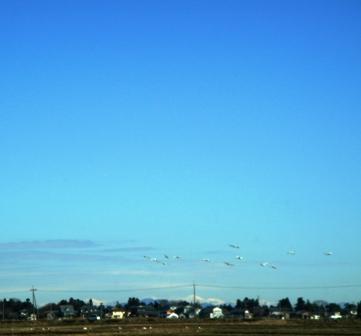空へ向かう白鳥ブログ