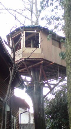 1月のツリーハウス