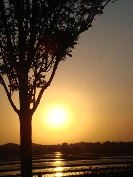 夕日と木 大