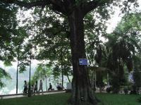 湖 30 木 RIMG0390
