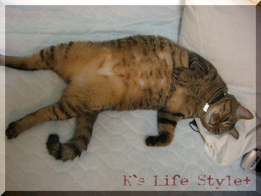 息子より人間らしく寝るネコ