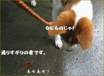 沢蟹ピンチ!
