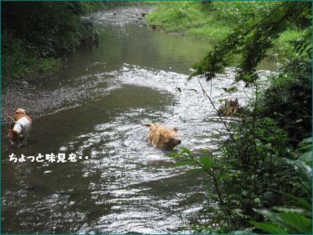 初泳ぎ 浅いけど・・