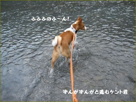 こんな川 平気でござる。