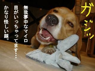 gaji.jpg