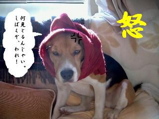 gantukemairo.jpg
