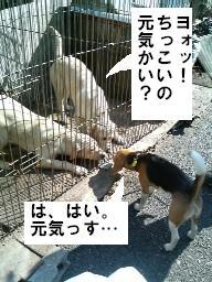 konchiwa.jpg