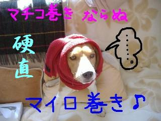 mairomaki.jpg