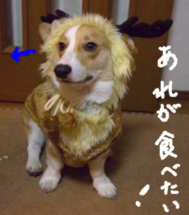 トナカイ犬?