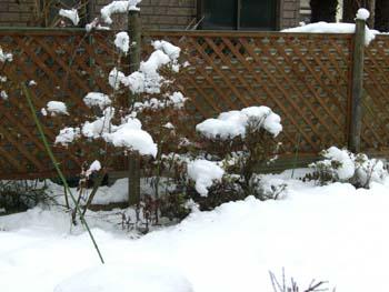 初!雪景色