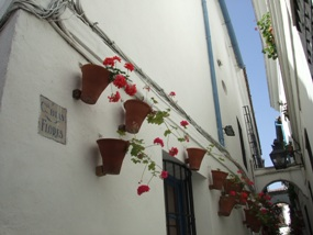 コルトバ花の小道1