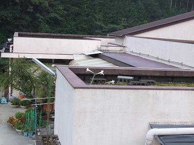 屋上のユリ