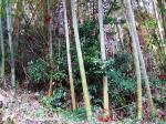 竹林・裏山