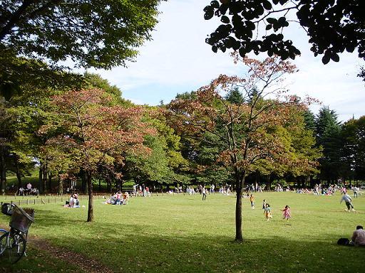 秋の小金井公園