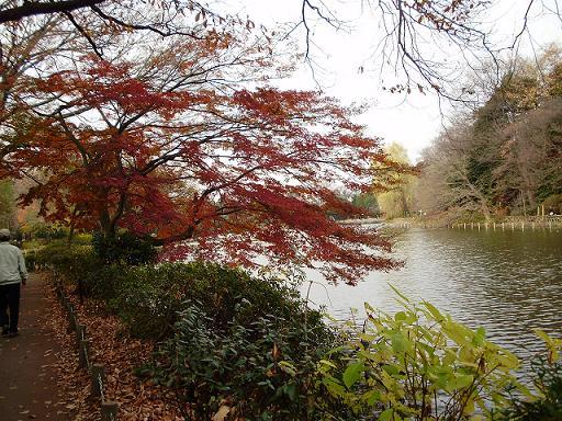 善福寺公園1