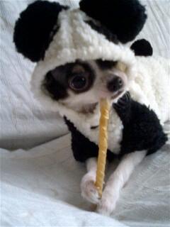 パンダあくび♪