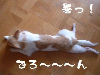 暑いんです・・・