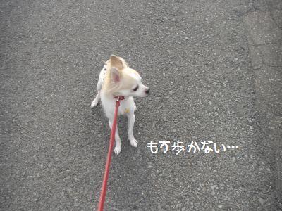 歩かない~