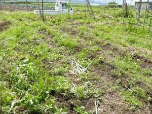 0806-27たまねぎ収穫後地