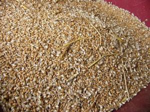 0807-6小麦ごみ取り