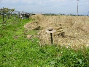 0807-14ライ麦刈り取り2