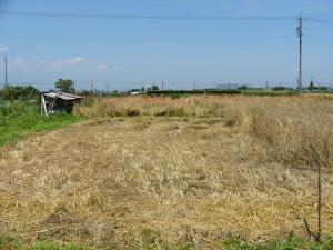 0807-17ライ麦刈り