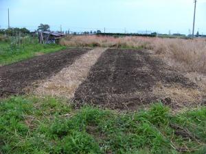 0807-17ライ麦刈りの後1