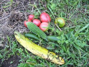0808-26収穫