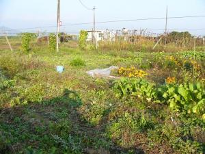 0810-19野バト農場