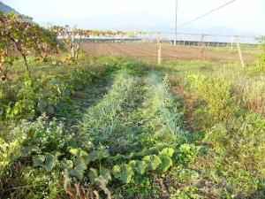 0810-19野バト農場2