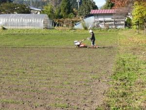 0811-14小麦の畝たて
