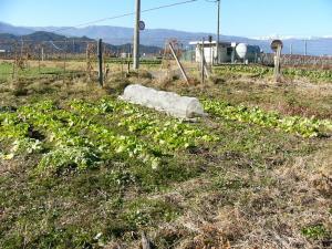 0812-1野菜1