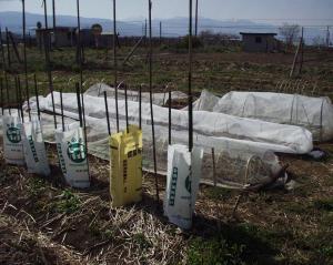 0905-1苗の定植