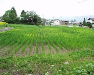0905-12かえで農場