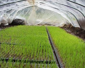 0905-22稲