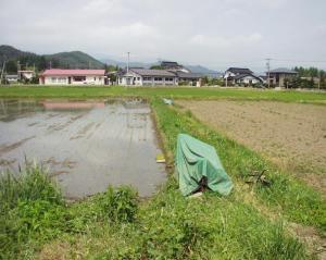 0906-15田んぼと大豆