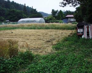 0906-27麦刈り