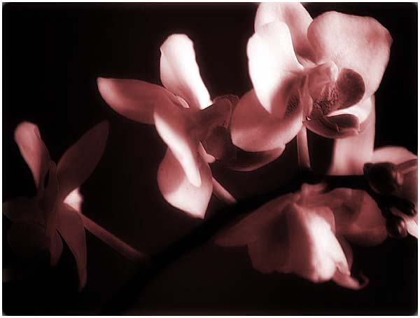 orchid822-1.jpg