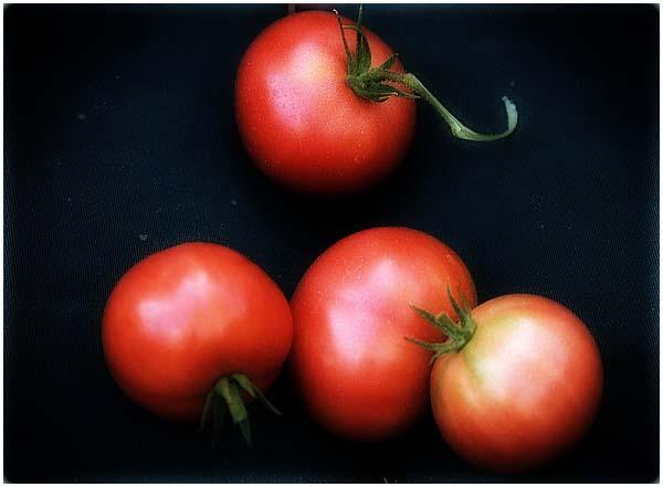 tomato822-03a.jpg