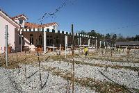 安曇野ワイナリー葡萄畑