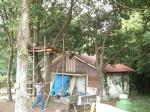 tree-h.jpg