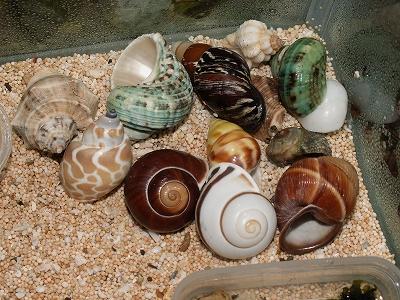 貝殻もたくさん置きました