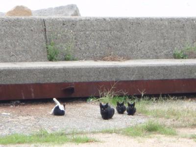 本島猫祭2